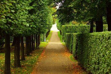 hedged-walkway.jpg
