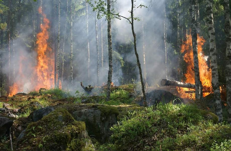 forest-fire-fire-smoke-conservation-51951_1296x.jpeg