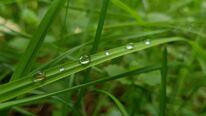 close-up-dew-drops.jpg