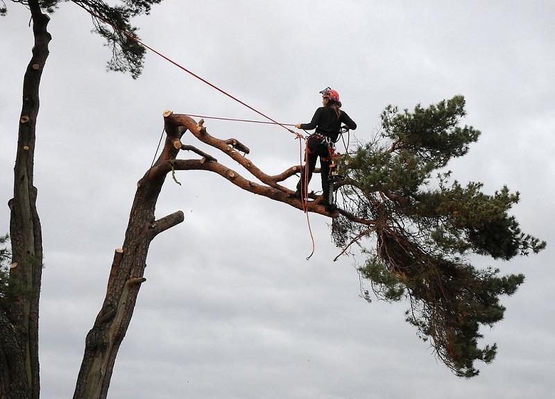gold-coast-tree-removal_1_orig.jpg