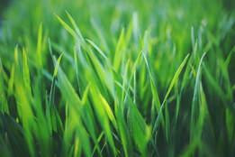 nicely-trimmed-grass.jpg