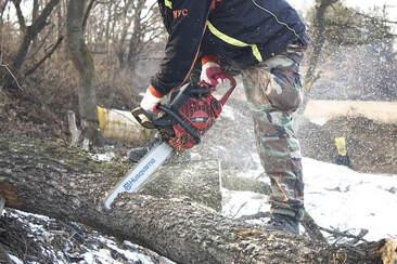 expert-cutting-tree.jpg